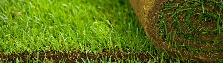 How to Prepare and Maintain Sod